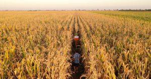 Fim do evento S-1250: agora a Aquisição de Produção Rural está na Reinf